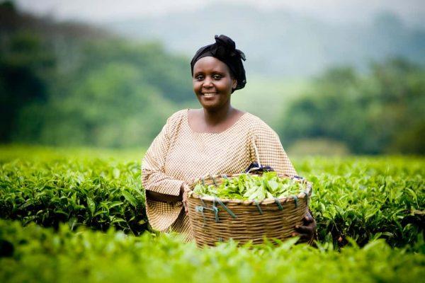 Birchall Tea Ethical